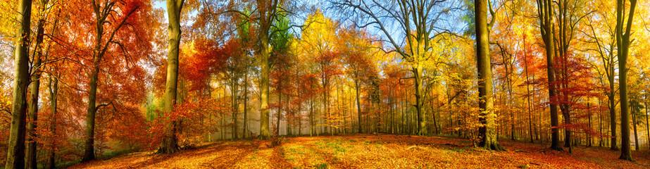 Kolorowa lasowa panorama w jesieni