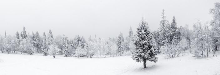 Zimowy krajobraz. Taganay National Park, Czelabińsk, Południowy Ural, Rosja
