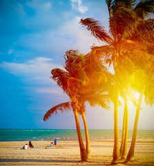 Family by coconut palm trees in Crandon Park at sunset