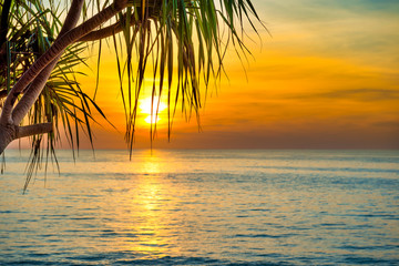 Beautiful landscape with sunset at tropical beach with palm trees