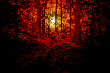 Beautiful mystical forest in red tones.