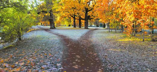 Późną jesienią mokry szlak w parku dzieli się na dwie ścieżki