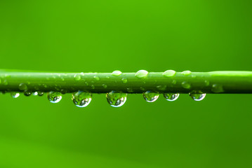 Closeup image of green grass with raindrops at morning sunshine as a natural background.