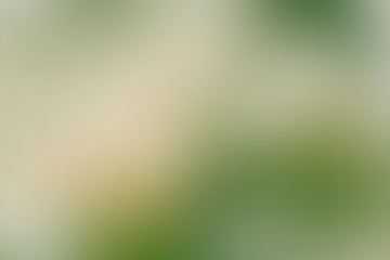 Gradient abstract background green, grass, meadow, lawn, field, backyard with copy space