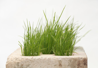growing grass made of bricks on a white background