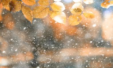 Park jesień w pierwszym śniegu