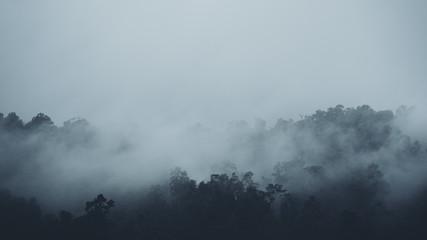 W mgle i lasach tropikalnych ciemność