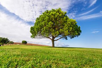 Sustainable eco-friendly park. Landscape of Green Fields under clouds and blue sky, Parque das Nações, Lisbon, Portugal.