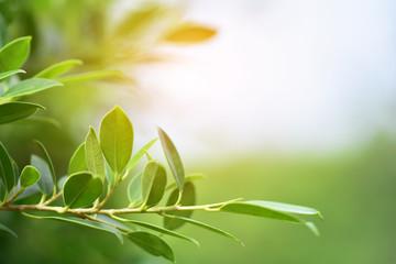 Green leaf nature background sunlight copy spec background