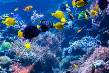 piękny podwodny świat z tropikalnymi rybami