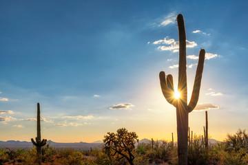 Sylwetka przy Saguaro kaktusem przy zmierzchem w Sonoran pustyni w Phoenix, Arizona, usa