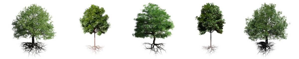 trees with roots isolated on white background