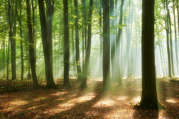Piękny poranek w lesie
