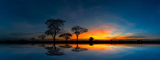 Panoramy sylwetki drzewo, góra z zmierzchem i. Drzewo sylwetkowy przeciw położenia słońca odbiciu na wodzie. Typowy afrykański zmierzch z akacjowymi drzewami w Masai Mara, Kenja.