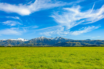 New Zealand summer landscape with mountain range Green Field and Blue Sky, South Island, New Zealand
