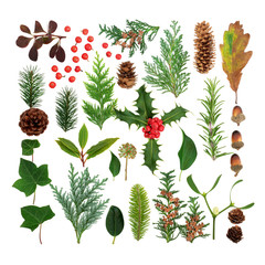 Winter flora and fauna selection forming a square on white background. Traditional natural symbols for the winter season.