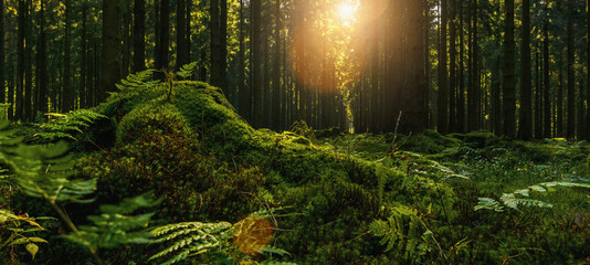 Beautiful forest in autumn with bright sun shining through a Tree trunk