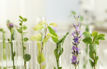 Closeup view of test tubes with different plants on blurred background