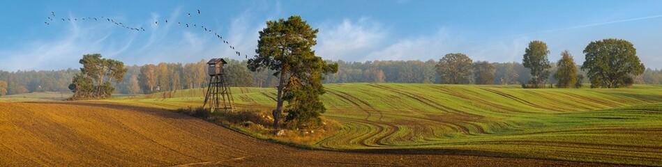 panorama jesiennego pola. Drzewa w polu w pobliżu lasu, klucz gęsi latających na tle błękitnego nieba