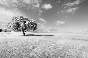 One lonely black and white tree Landscape of Fields under grey sky. Parque das Nações, Portugal.