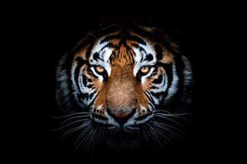 Portret tygrysa z czarnym tłem