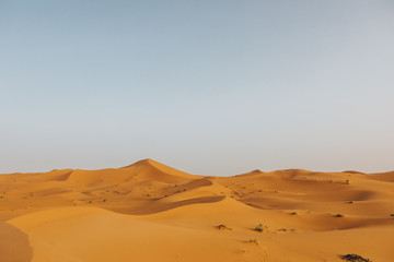 Beautiful landscape of orange desert in Africa, with sand dunes and horizon.