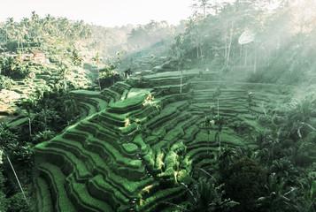 Azja Południowo-Wschodnia. Widok z lotu ptaka drona. Krajobraz pola ryżowe i taras ryżowy Tegallalang w pobliżu Ubud wyspy Bali w Indonezji