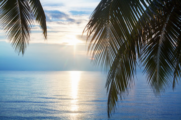 Palm tree leaves silhouette, sunset on blue sea background, tropical sunrise seascape, bright yellow sun glow reflection on water, ocean waves, vacation on paradise exotic island banner, holiday relax
