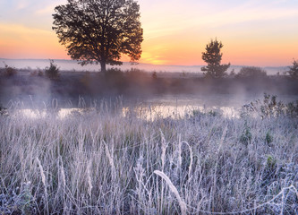 The first frost and frost on the grass by the river. Beautiful oak on the riverbank in the fog at dawn. Beautiful late autumn landscape in the wild.