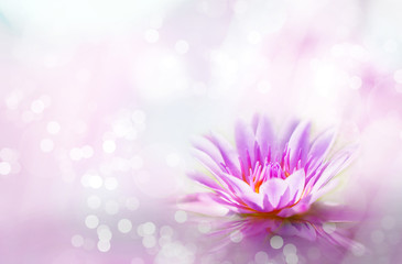 Soft pink lotus on pond with soft sunlight blur bokeh reflection on water background, Lily water flower on the lake