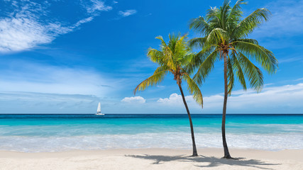 Paradise beach with palm trees and sailboat in tropical sea in Key West, Florida