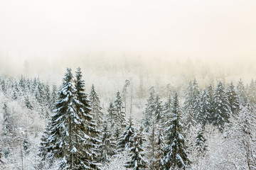 View of a forest with cold fog in winter