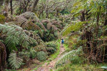 Forest on Reunion Island