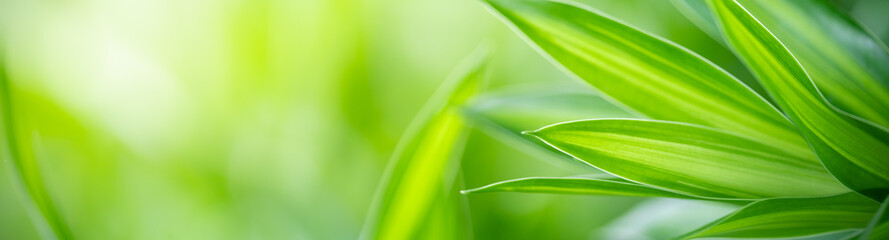 Closeup nature view of green leaf on blurred greenery background under sunlight with bokeh and copy space using as background natural plants landscape, ecology cover page concept.