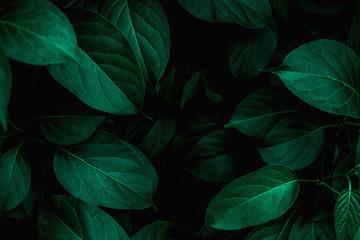 tekstura liści tropikalnych, streszczenie zielonych liści i ciemny proces ton, tło wzór natury