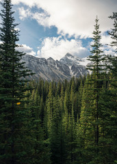 Green pine forest with rockies mountain with blue sky in Banff national park