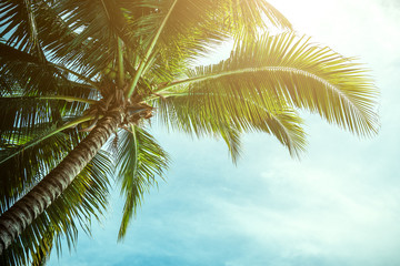 Palm trees against blue sky, Palm trees at tropical coast, vintage toned and stylized, coconut tree,summer tree