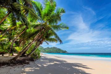 Słoneczna plaża z palmami kokosowymi i tropikalnym morzem. Letnie wakacje i koncepcja tropikalnej plaży.
