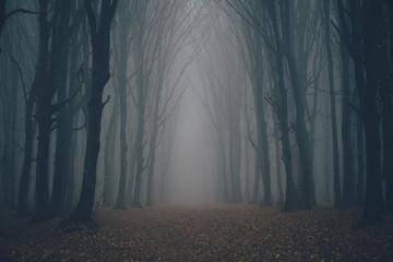 Las we mgle z mgłą. Wróżka strasznie wyglądające lasy w mglisty dzień. Zimny mglisty poranek w lesie grozy z drzewami