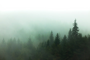 fog and mist in the forest. tree view in nature