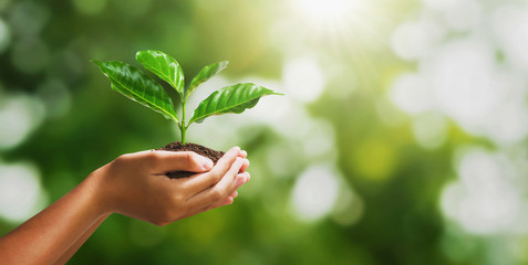 hand holding young plant on blur green nature background and sunslight. concept eco earth day