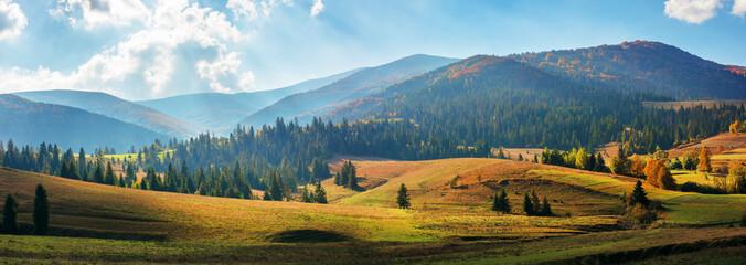 obszar wiejski Karpat jesienią. cudowna panorama gór borzhawskich w jarzębatym świetle obserwowanym ze wsi podobovets. pola rolnicze na wzgórzach w pobliżu lasu świerkowego