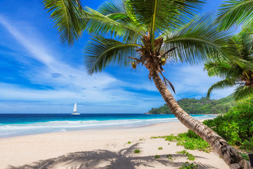 Sandy beach with coconut palm trees and a sailing boat in the turquoise sea on Paradise island.