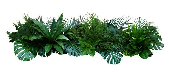 Zielone liście roślin tropikalnych krzew (Monstera, palma, roślina gumowa, sosna, paproci gniazdo ptaka) kwiatowy układ wewnątrz ogród natura tło na białym tle, zawiera ścieżkę przycinającą.