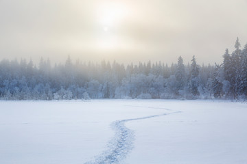 Footprints in the snow to the forest in a cold winter landscape