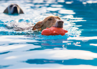 dogs playing and swimming in the pool