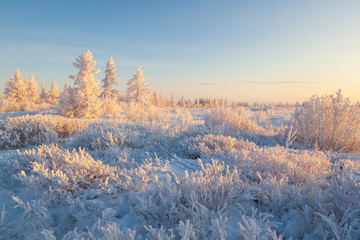 Beautiful winter landscape of tundra , frost on the branches of trees, the first snow, Arctic Circle.