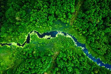 Zadziwiające kwitnące glony na zielonej rzece, widok z lotu ptaka