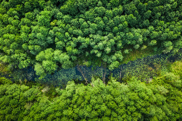 Green forest and river in summer, aerial view