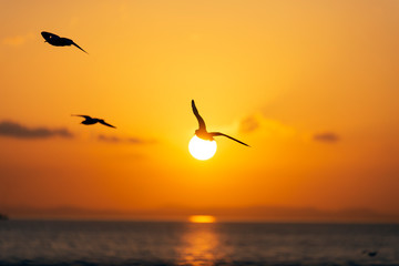 Sunset view with seagulls and sea.